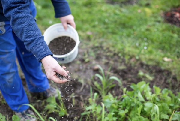 適量有機肥可以提升栽培土壤的品質嗎?